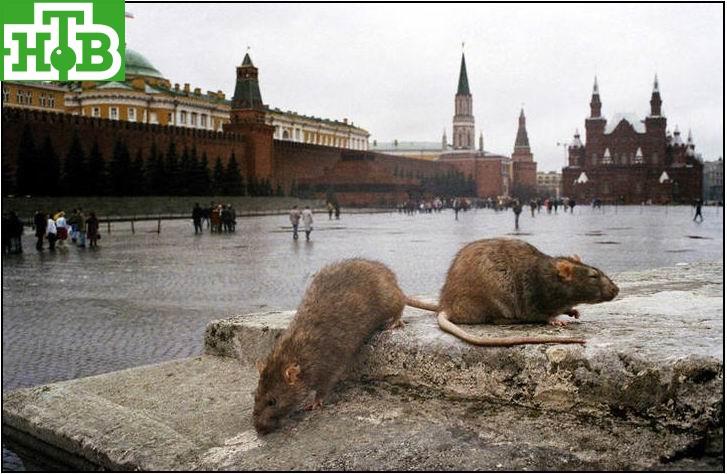 http://img-fotki.yandex.ru/get/4527/19902916.d/0_78edb_99cf5b31_orig