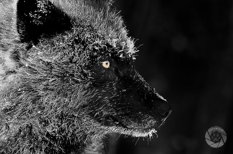 Во власти инея