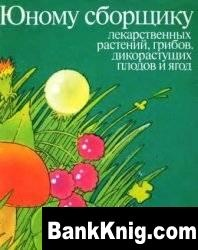 Юному сборщику  лекарственных растений, грибов, дикорастущих плодов и ягод