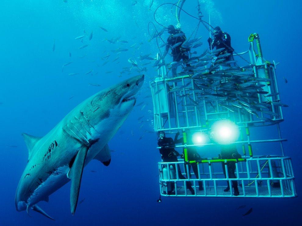 Лучшие фотографии от National Geographic за декабрь 2011г.