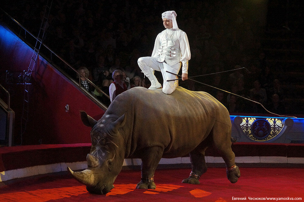 Осень. Цирк Никулина. Носорог. 22.10.15.11..jpg