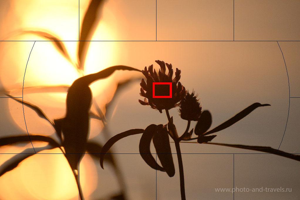 Фото 4. Уроки фотографии. Фокусировка по одной точке