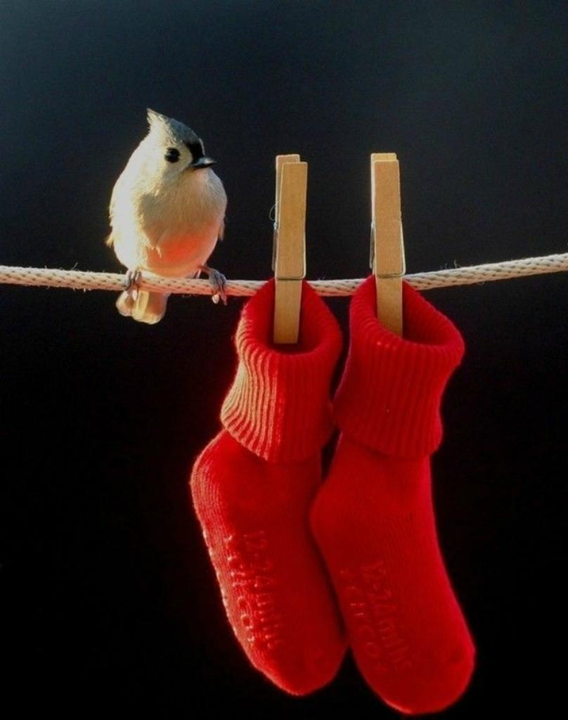 Я думаю, что эти умилительные фотографии птиц мало кого оставят без эмоций.