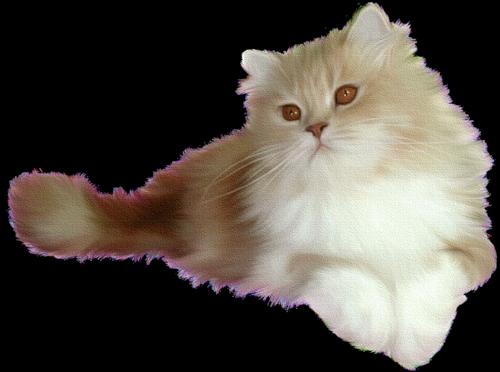 Коты в картинках на прозрачном фоне