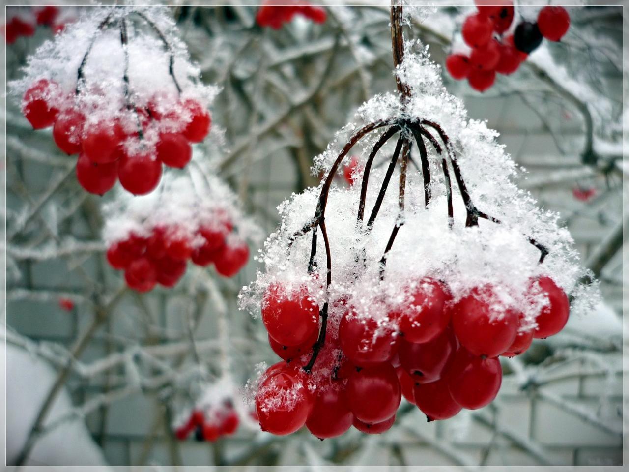 Под белым нежным одеялом января...