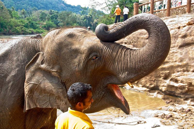 Кормление слона