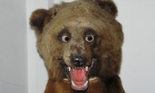 чучело медведя в музее