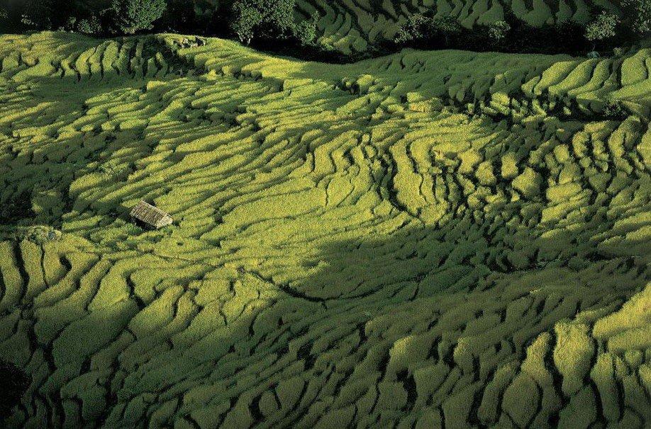 52. Рисовые поля в Непале.