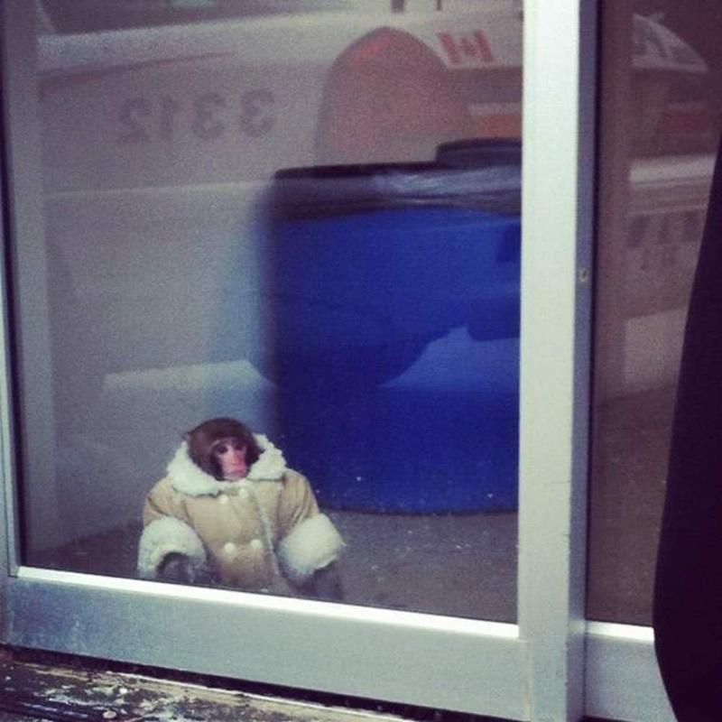 Обезьяна в магазине Ikea в Торонто (видео)