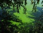 321.JPG Зелёные воды...