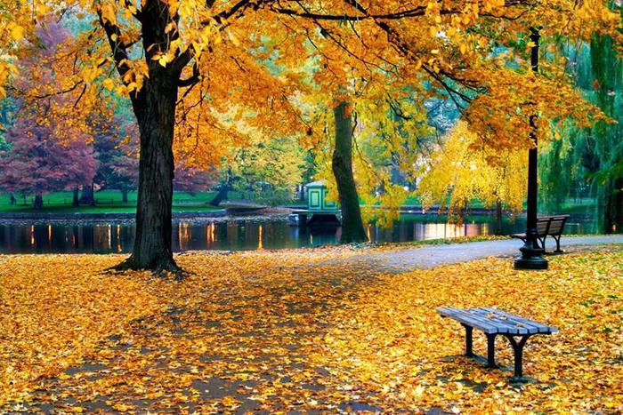 «И снова осень явлена. За ней – зима…»