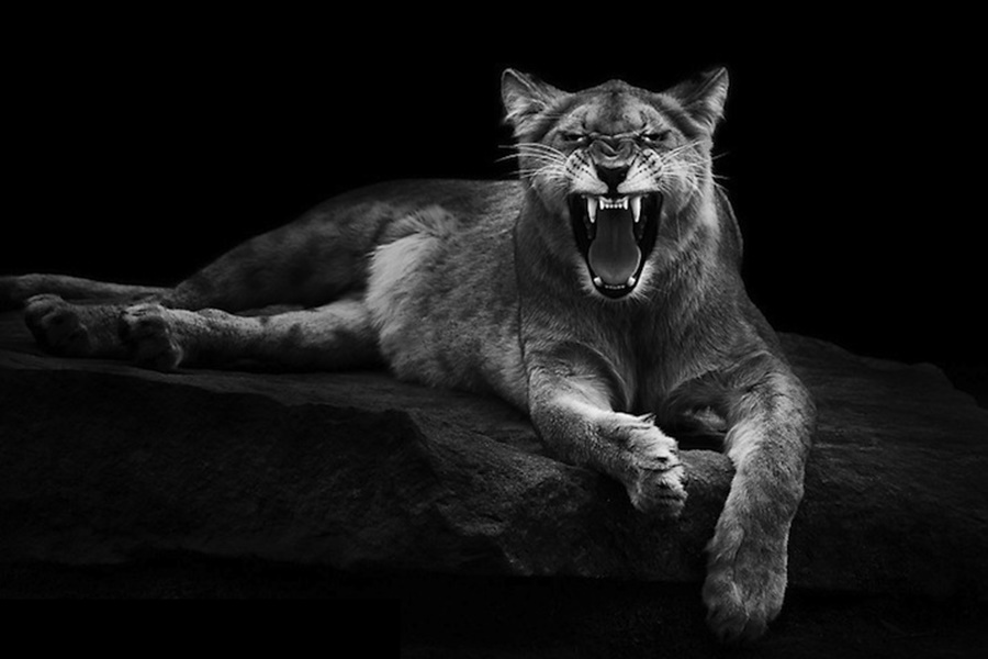 Лукас Холас. Черно белые портреты животных 0 1419db 40624a8a orig