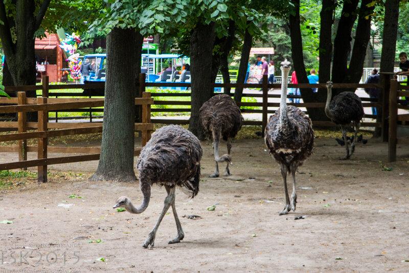 kyiv_zoo-75.jpg