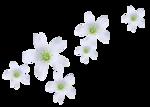 «Magic of Flowers» 0_7c4b7_d91fcf25_S