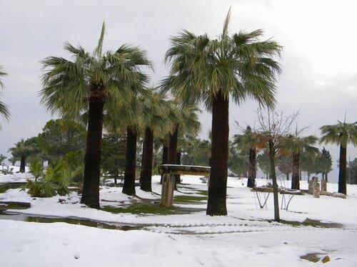 Хиераполис -пальмы (Памуккале)