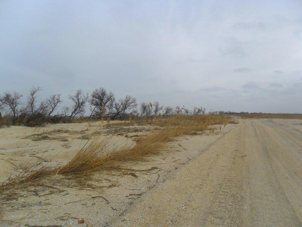Зимой, на дороге песчаной ... SAM_5561.JPG