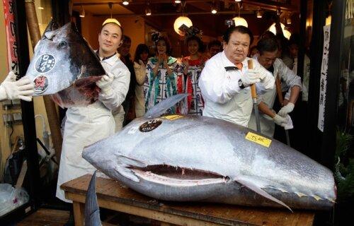Голубой тунец за 736$.