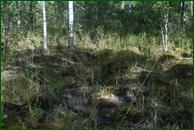 http://img-fotki.yandex.ru/get/45443/15842935.38c/0_eb369_d57cbe31_orig.jpg