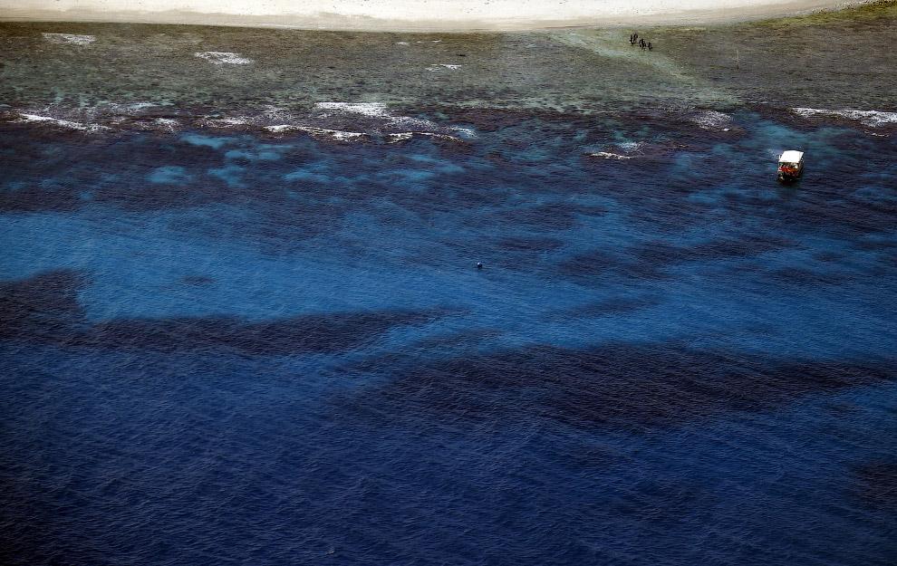 Большой Барьерный риф является самой большой в мире экосистемой, поскольку представляет собой к