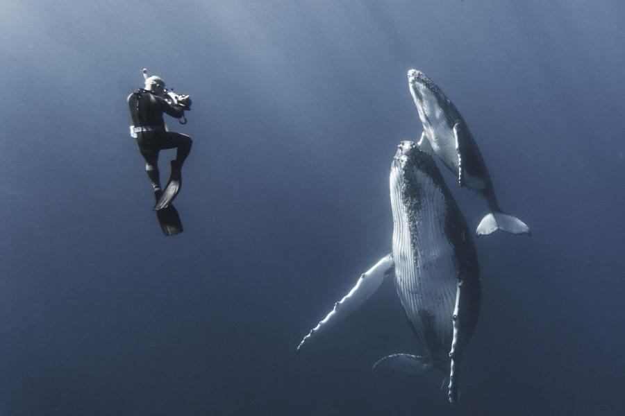 2. В последние несколько лет фотограф Габи Баратью очень часто работал с китами и по его словам, каж