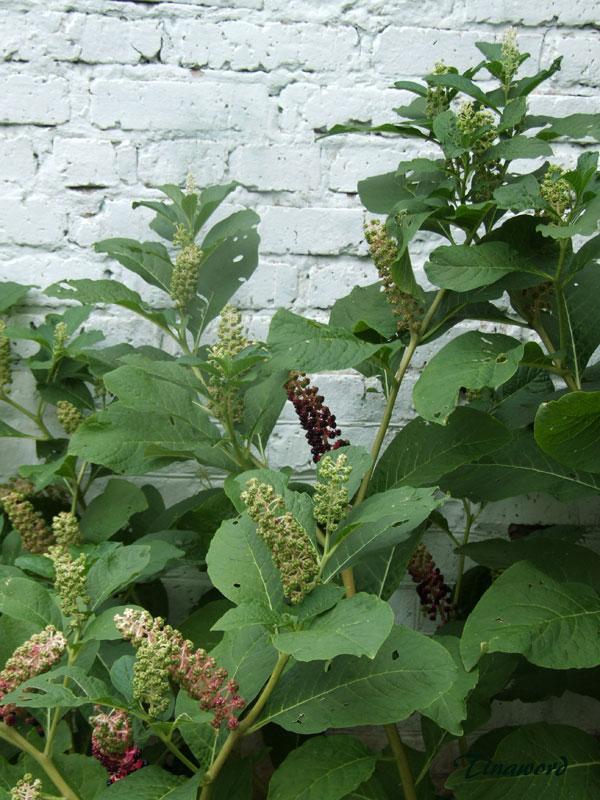 растение-6.jpg