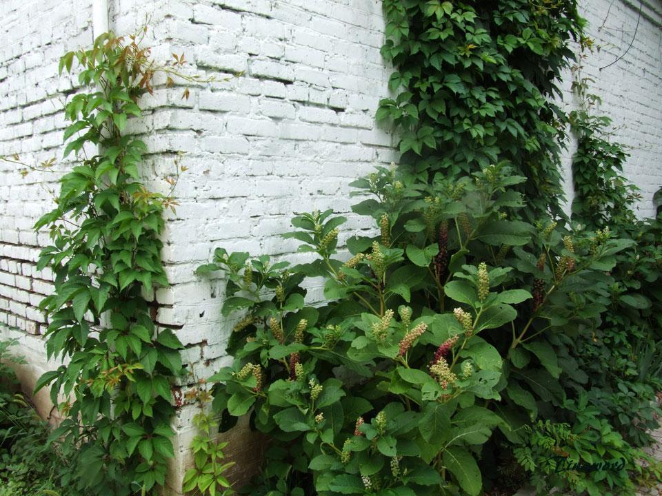 растение-9.jpg