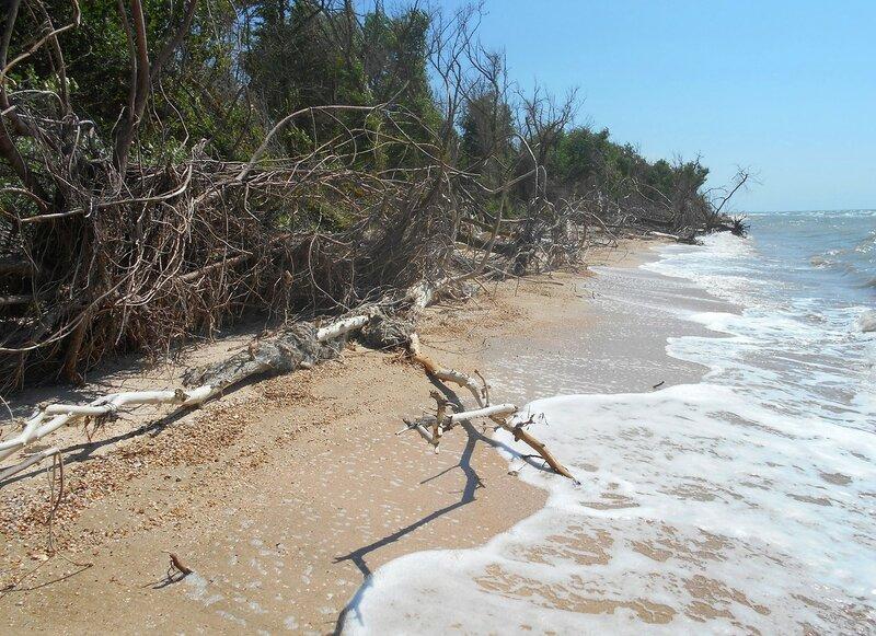 На песке, движенье вод ... DSCN6884.JPG
