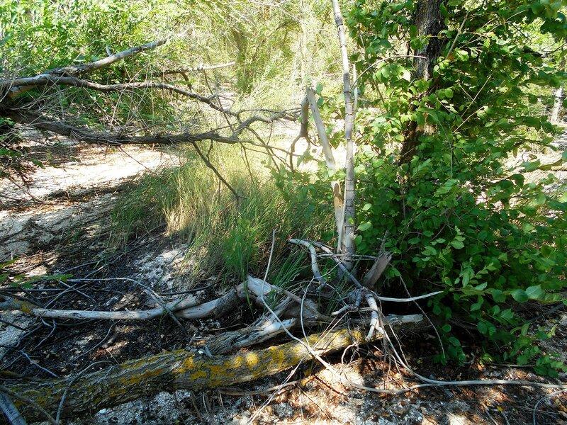 Лесные знаки ... DSCN6902.JPG