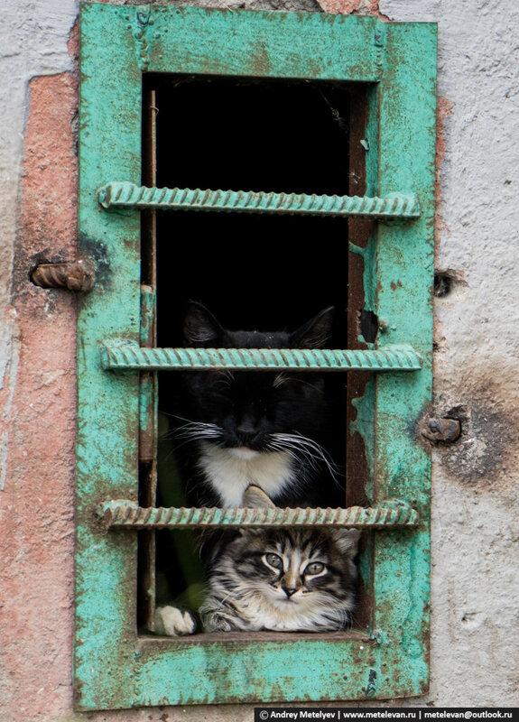 Из подвала на мир смотрят кошка и котенок