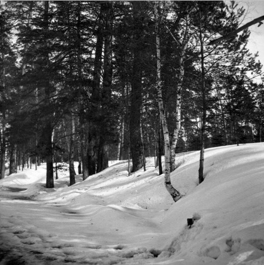 1904. Прогулка в Сокольники. «Берег пруда в Оленьем парке»