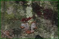 http://img-fotki.yandex.ru/get/45537/15842935.3bf/0_eee6a_f7ec9084_orig.jpg
