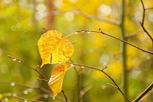 Осенний нактюрн