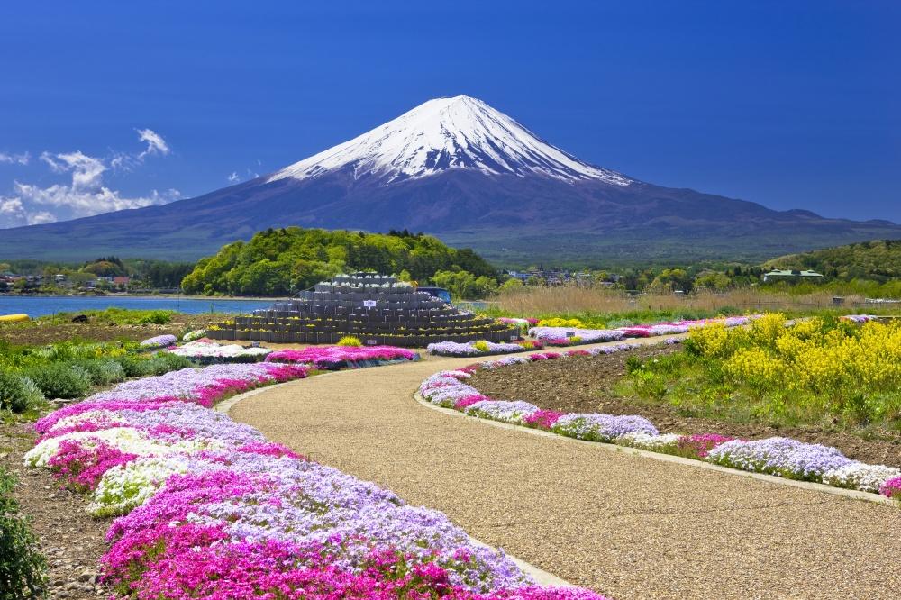 ВЯпонии весной цветет нетолько сакура