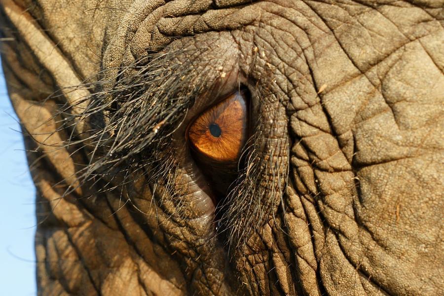 1. Азиатский слон Если раньше эти азиатские великаны часто встречались в странах Юго-Восточной Азии,
