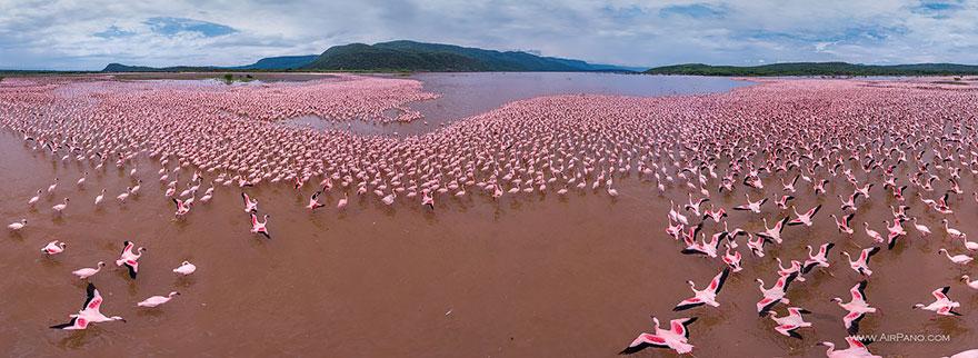 15. Фламинго, Озеро Богория, Кения
