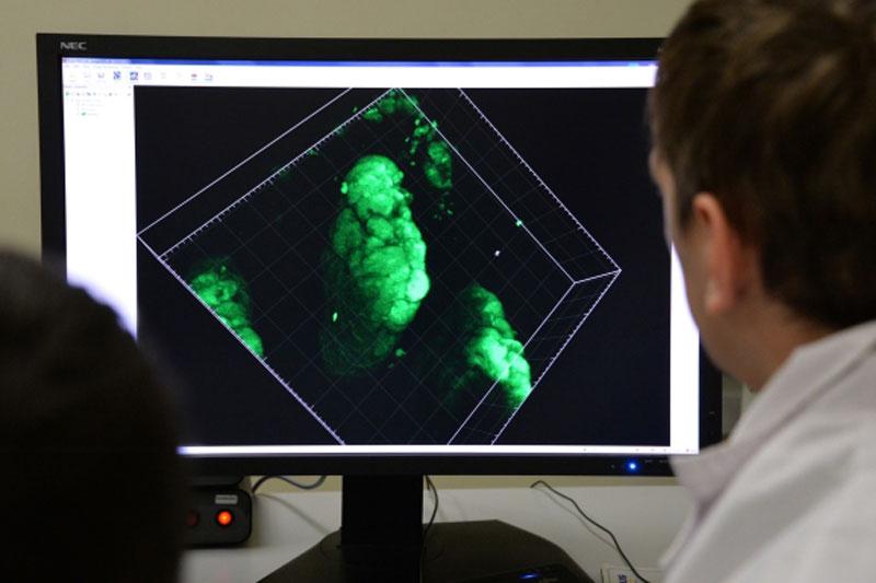Ученые изобрели бумажную батарейку, работающую наметаболизме бактерий