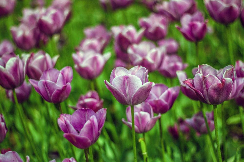 15.сад-счастья.jpg