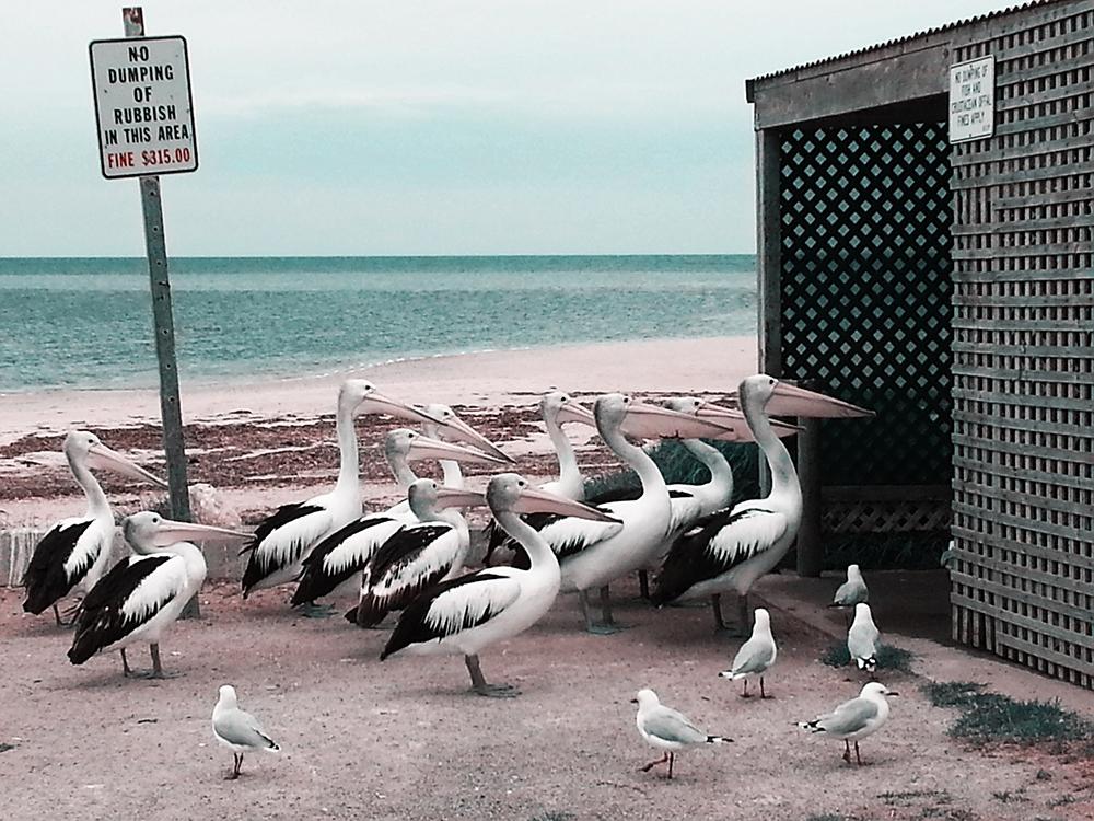 © Melissa Little, Australia, Shortlist, Nature & Wildlife, Open, 2015 Sony World Photography Aw