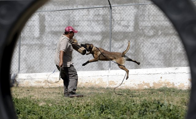 Mexican K-9