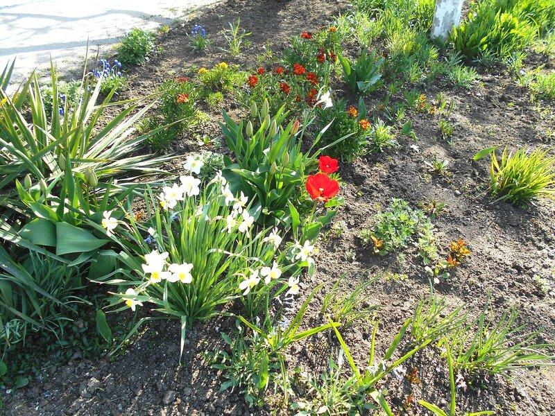 На земле весенней ... DSCN5016.JPG