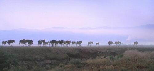 Кони в тумане