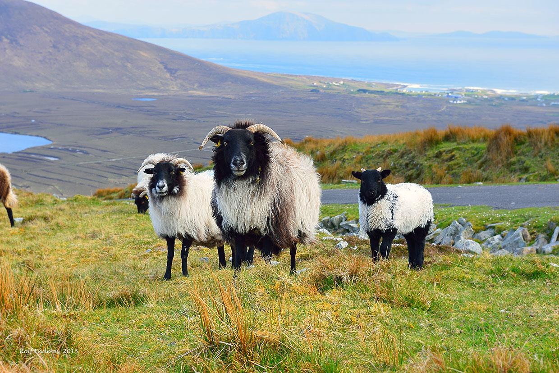 Ireland's mysticism Rolf Enderes