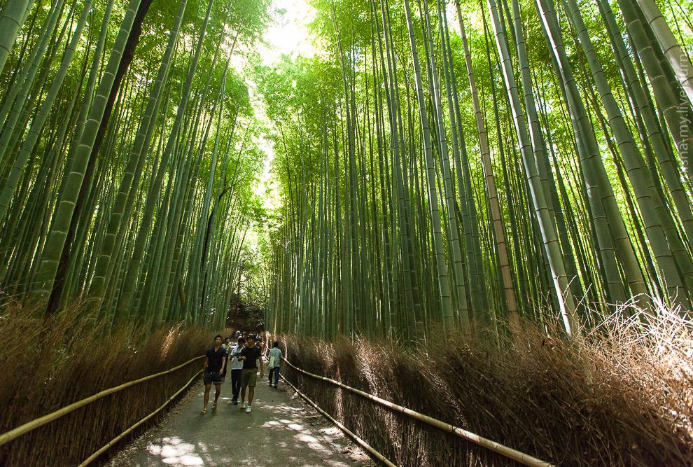 6. Под легким ветром бамбуковые стволы перестукиваются с приятным звуком.
