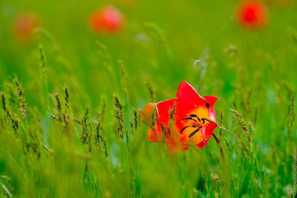 9. А с этого цветка еще не успела исчезнуть утренняя роса. В 5 утра я выходил из машины, но неб