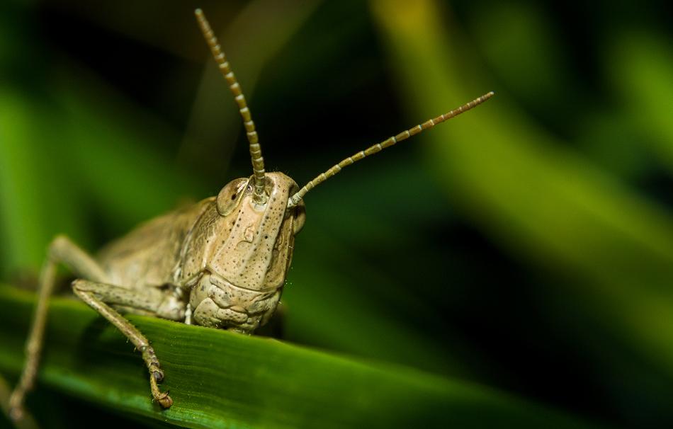 Гусеницы меня вообще поразили…Очень красивые создания!