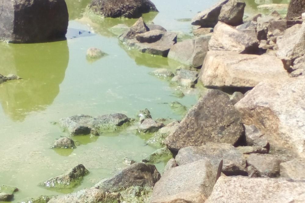 «Содержит аммиак»— вНижнем Тагиле запретили пить водопроводную воду