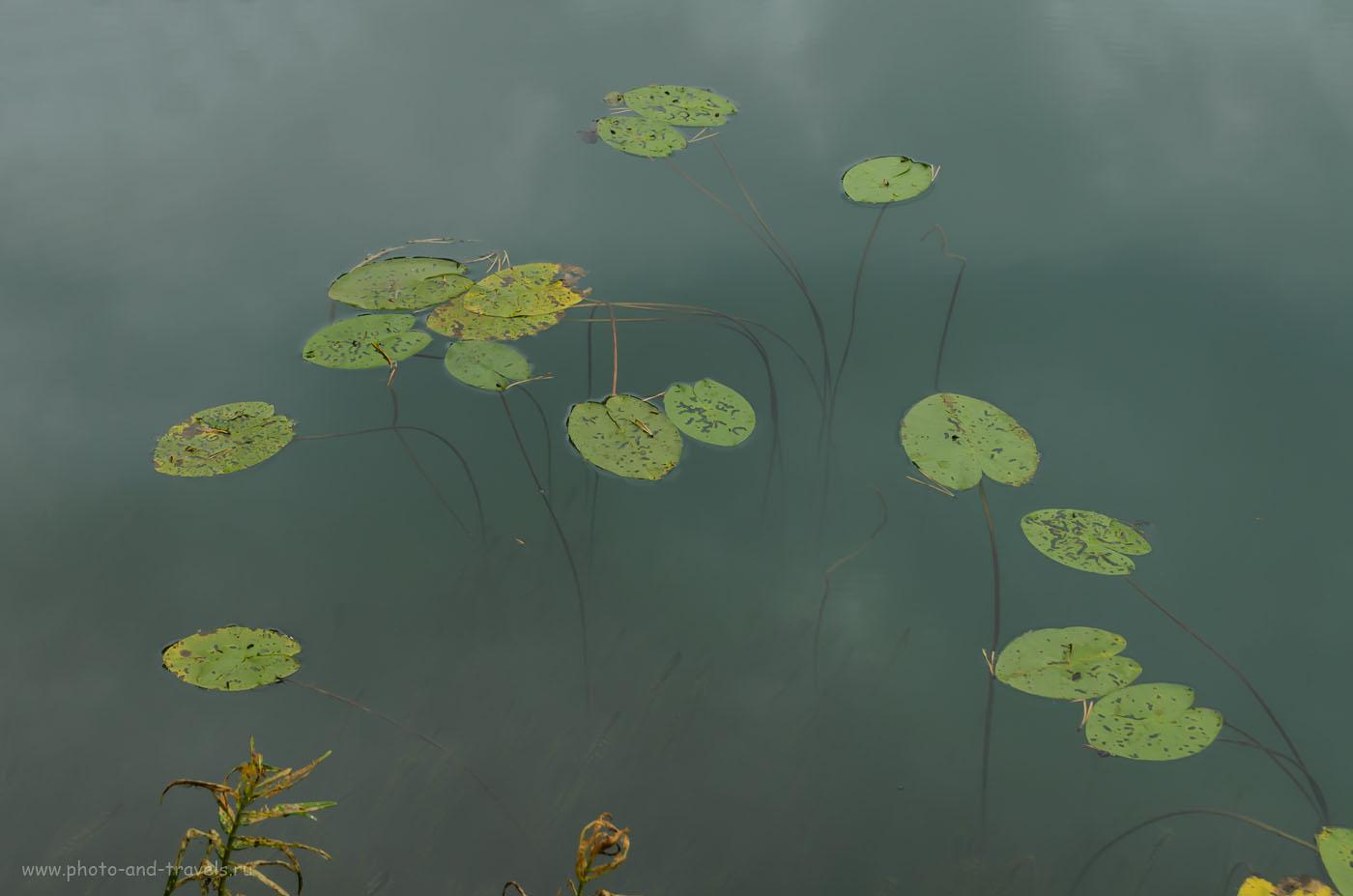 10. Кувшинки на озере Бездонном. 1/80, 8.0, 35, 200.