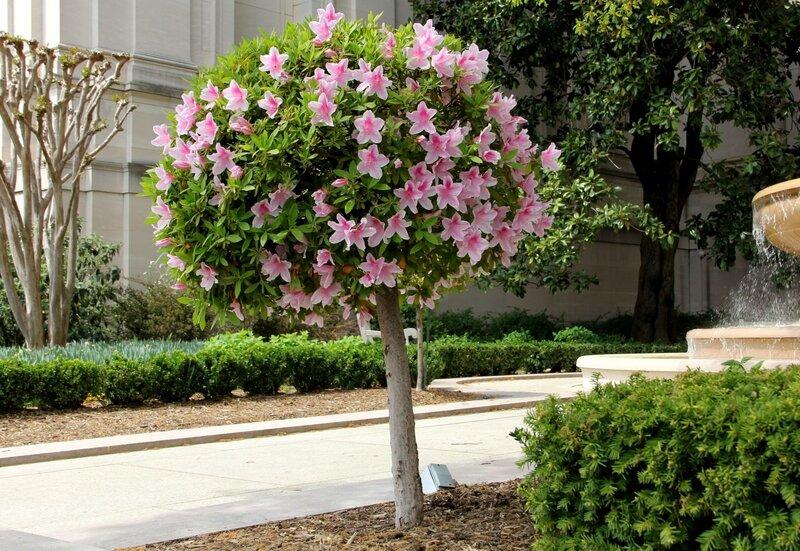 Цветущее дерево!