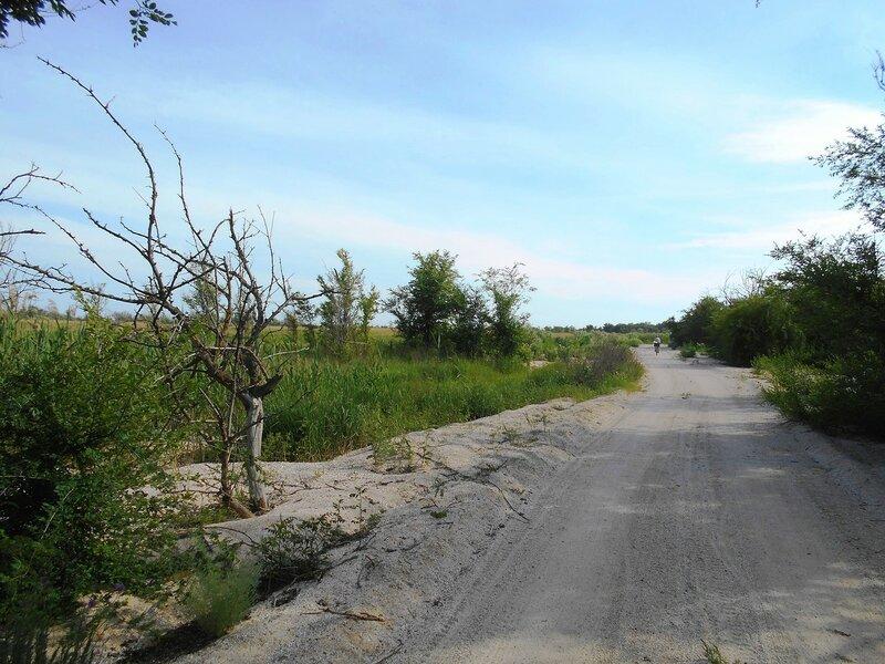 Дорожка, пески, и зелень Весны ... DSCN5779.JPG