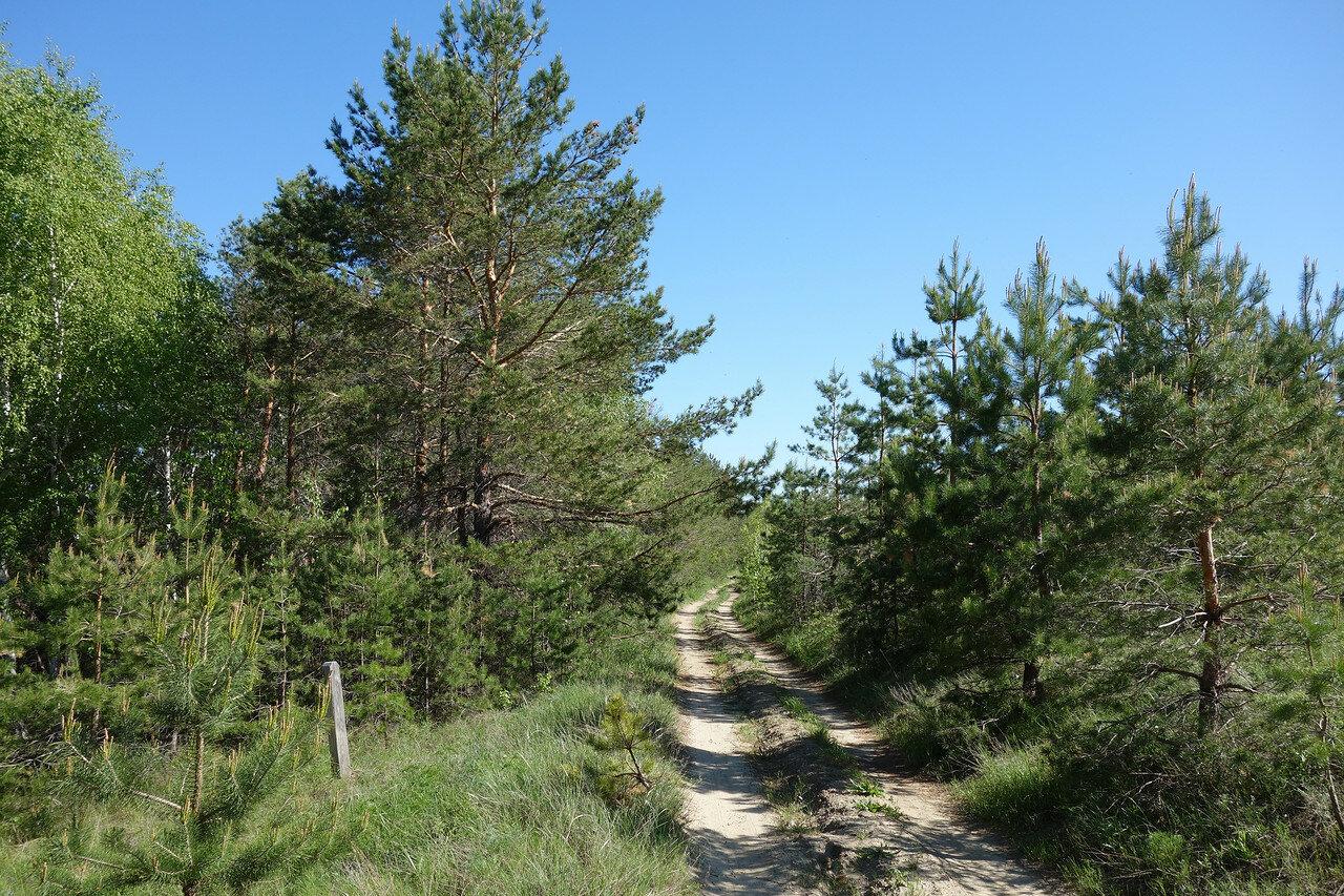 нагорный лес
